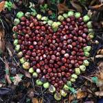 Conker Heart
